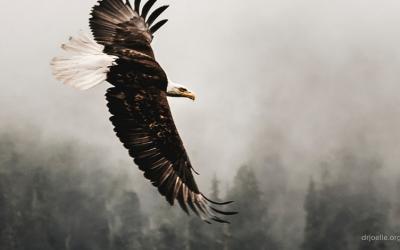Soaring Eagles!